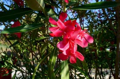 Profitez d'un camping fleuri malgré la canicule